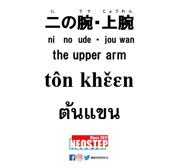 二の腕-ワンポイントタイ語表現